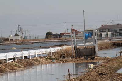 水路を逆流して上下の田んぼに海水が押し寄せています