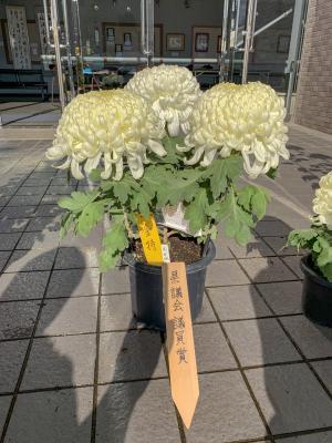 県議会議員賞