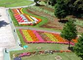 花の谷イメージ